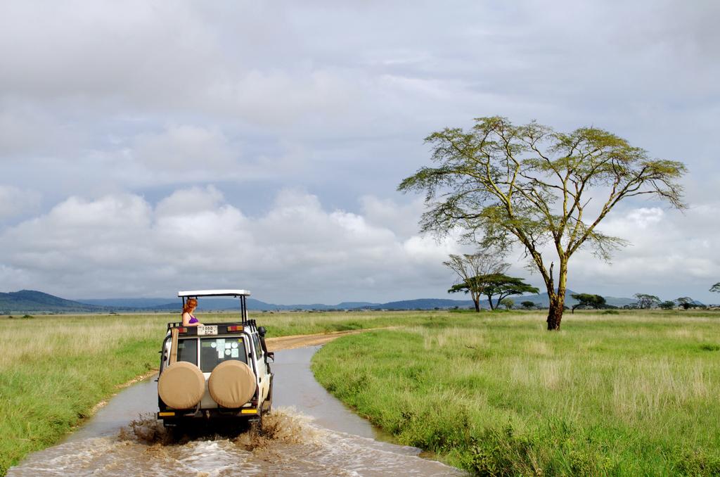 Sur le chemin du retour - Serengeti
