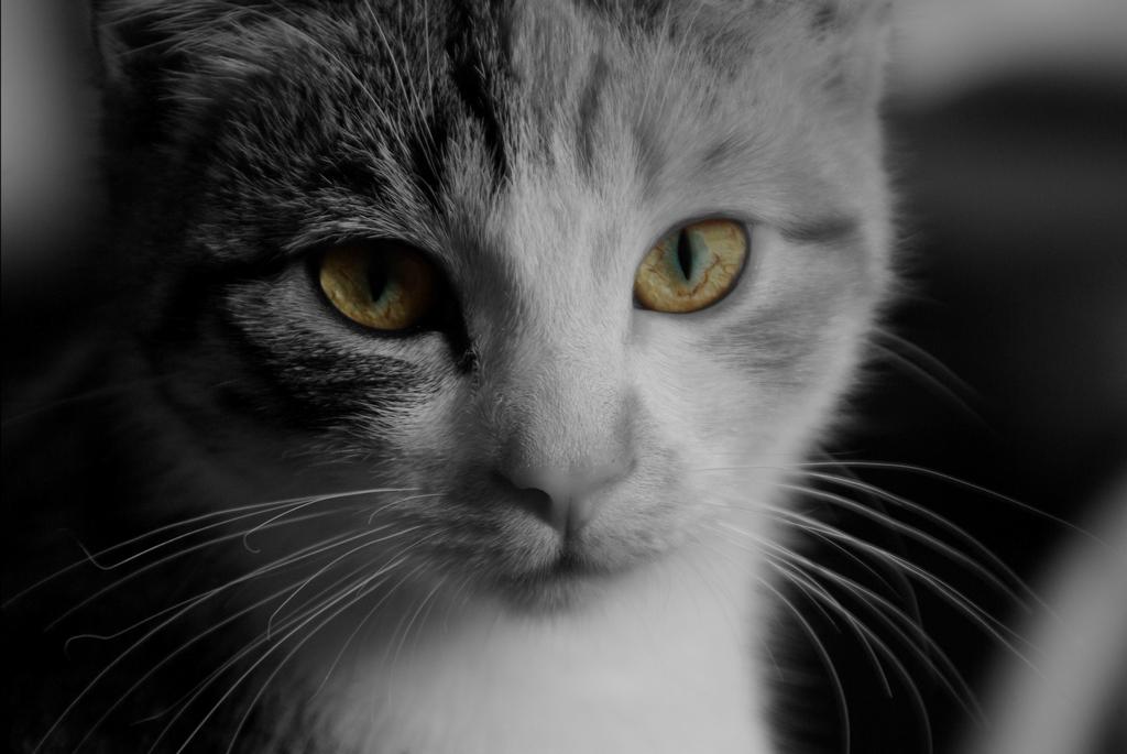 Elfick, chat de la maison