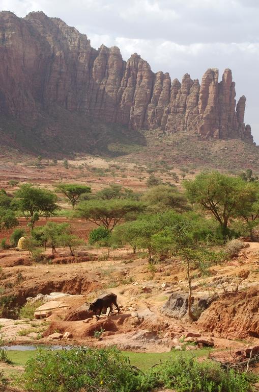 Les pics rocheux ont des formes très diverses selon les endroits
