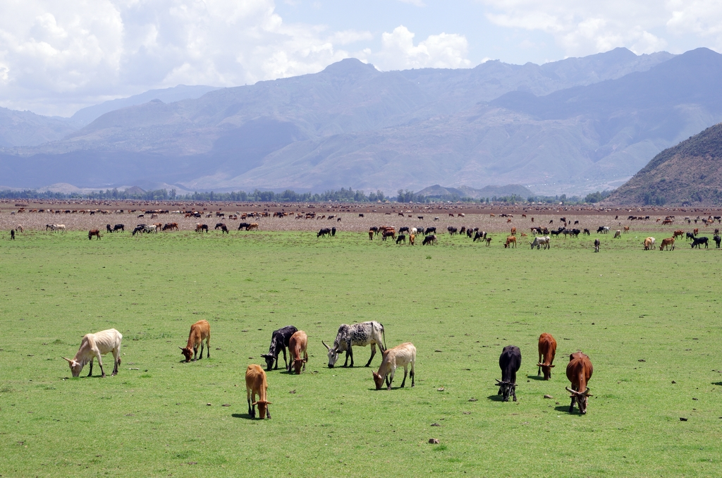 Contrairement à ce que l'on a comme image en tête, les paysages d'Ethiopie sont relativement verts