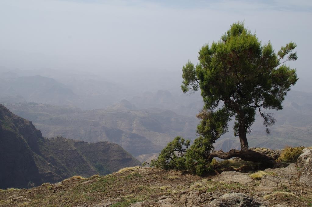 Parc national des Simiens