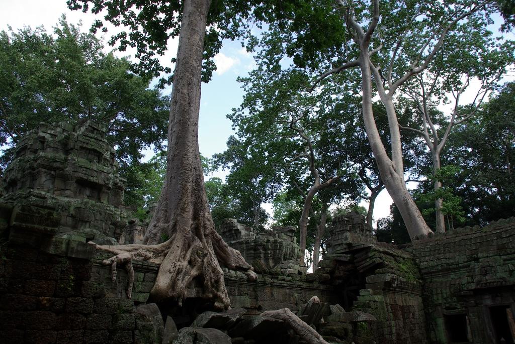 Ta Phrom, Cambodge