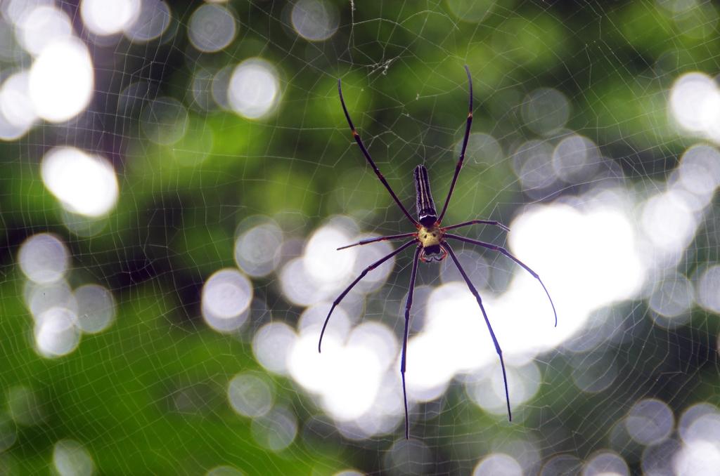 Les insectes sont nombreux dans le pays. Il vaut mieux regarder où l'on met la tête - Srimangal