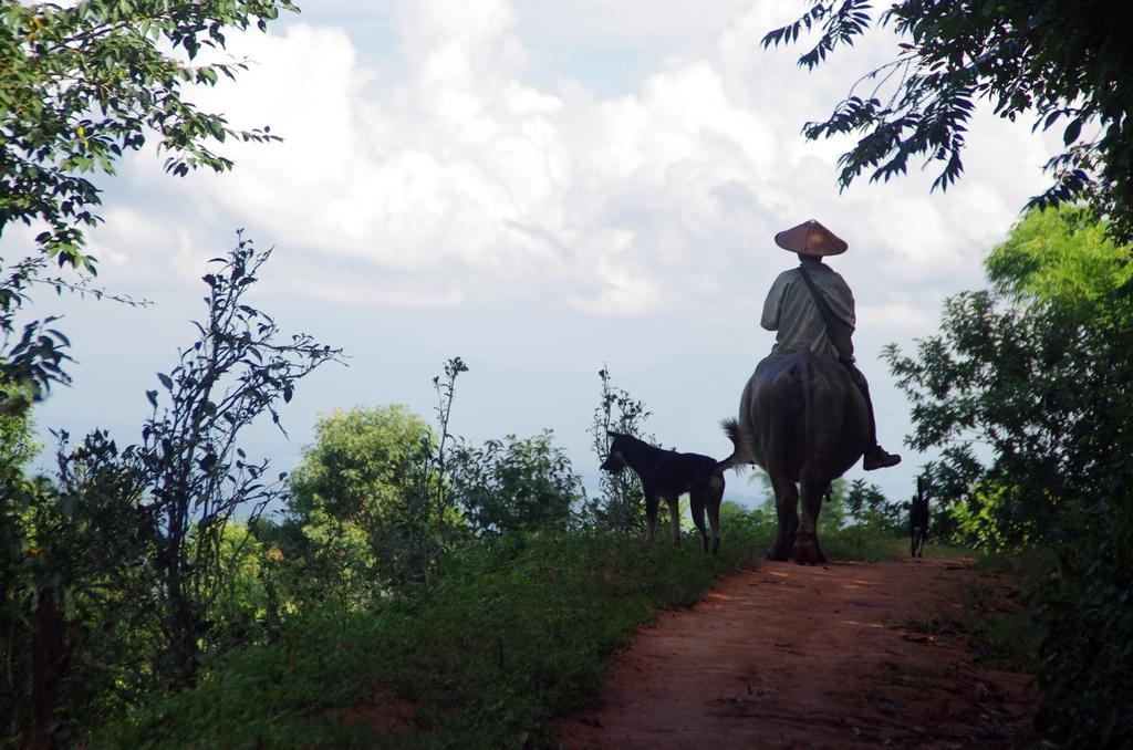 Les chevaux sont présents dans le pays, mais il n'est pas rare de voir les bergers montés sur leurs buffles