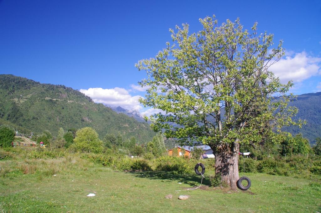 Cachamo - Chili