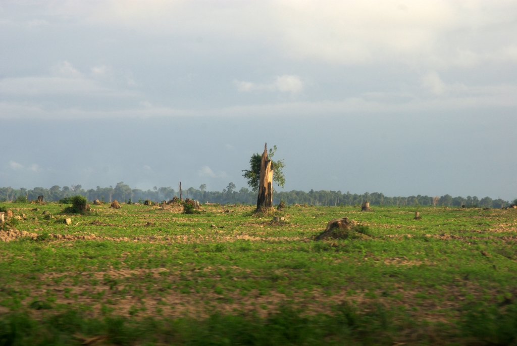 Triste déforestation - Cambodge