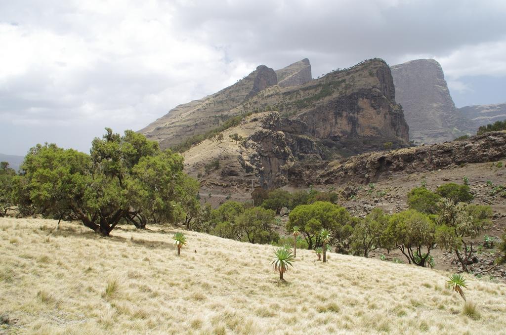 Hauts plateaux du rift - Ethiopie