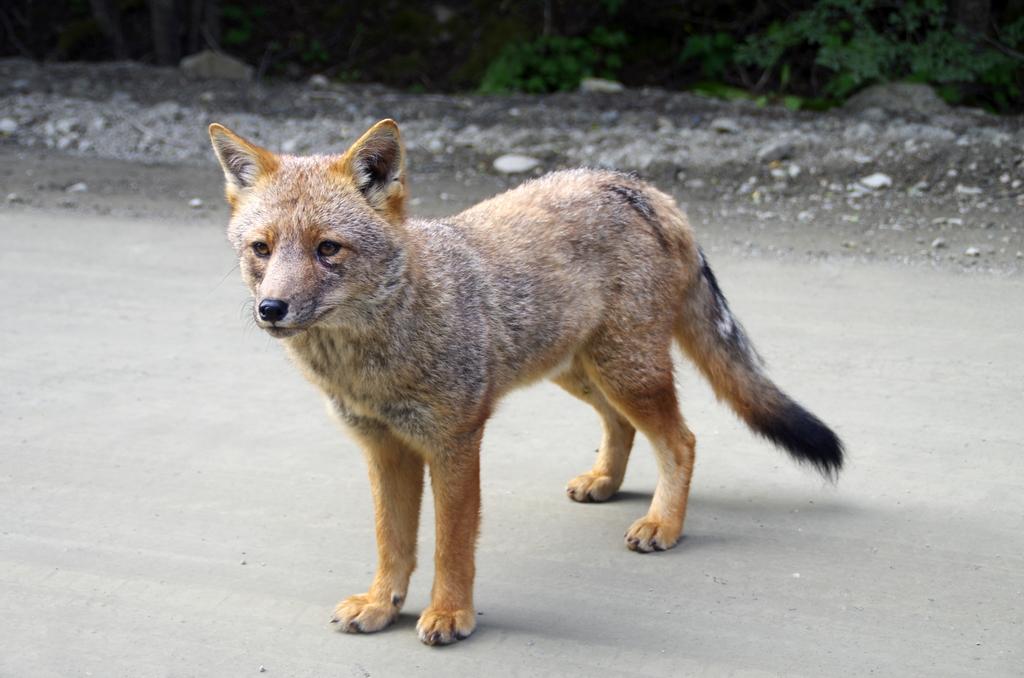 Parc national Tierra del Fuego - Argentine