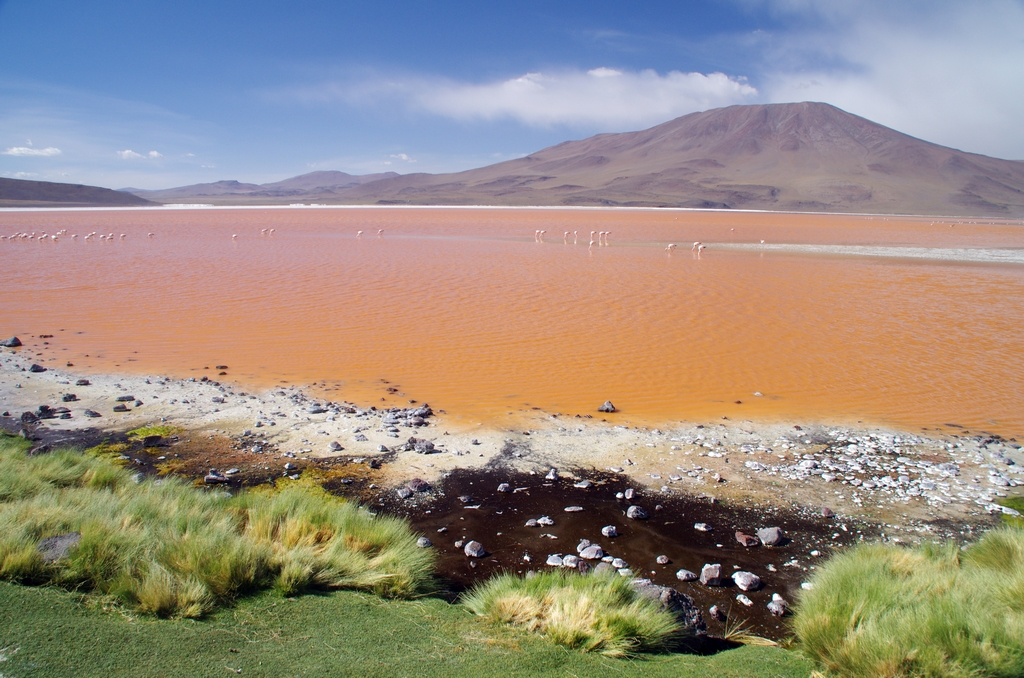 Lac rose - Altiplano, Bolivie