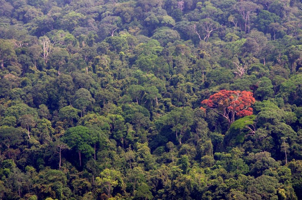 Canopée - Gabon