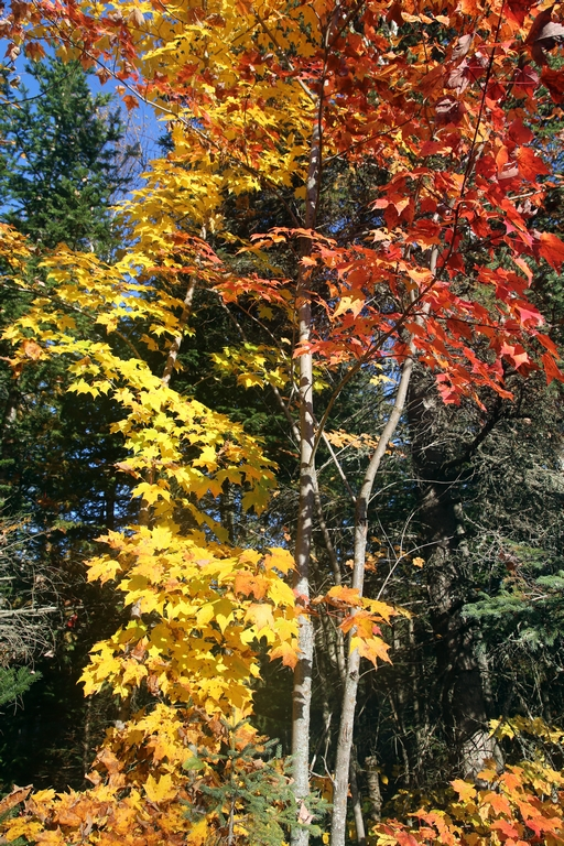 Le rouge et le jaune, sont manifestement les couleurs du moment - Québec