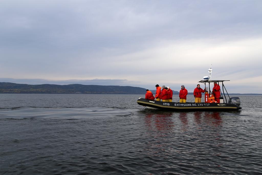 Des baleines, il y en a. Encore faut-il regarder au bon endroit au bon moment - Québec