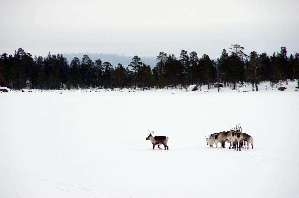 Rennes, Laponie Finlandaise