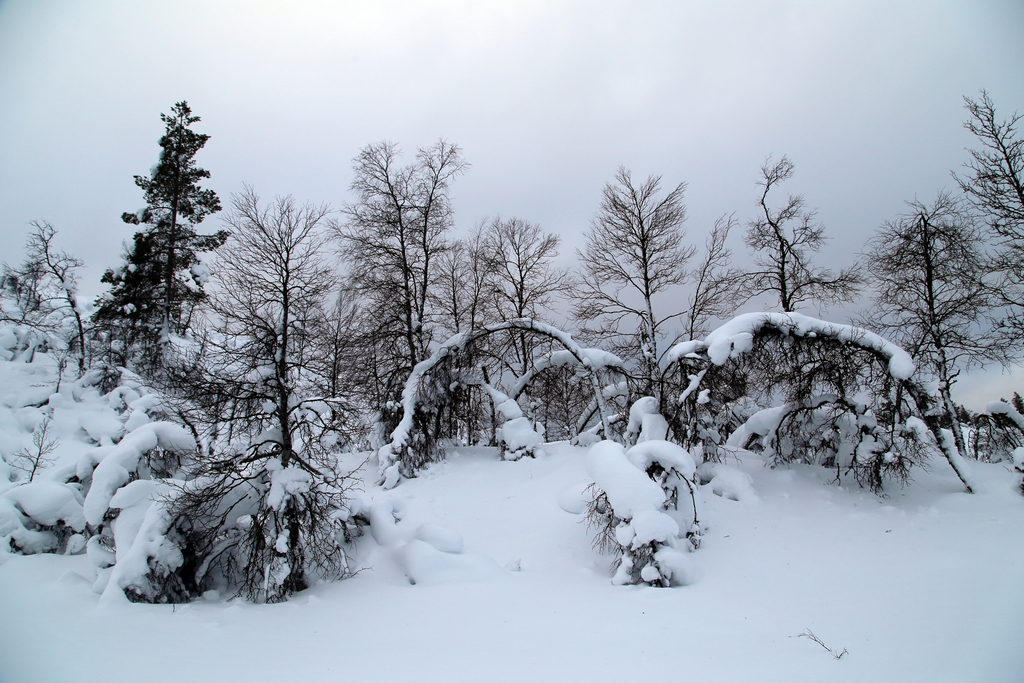 Saariselka, Laponie finlandaise