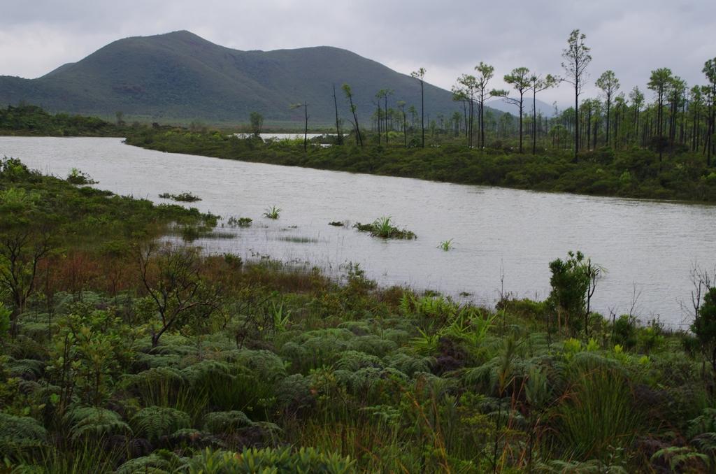 Un paysage à la Jurassique Parc. D'ailleurs la BBC est venue tourner des épisodes sur les dinosaures dans cet endroit. Sud de la Grande Terre