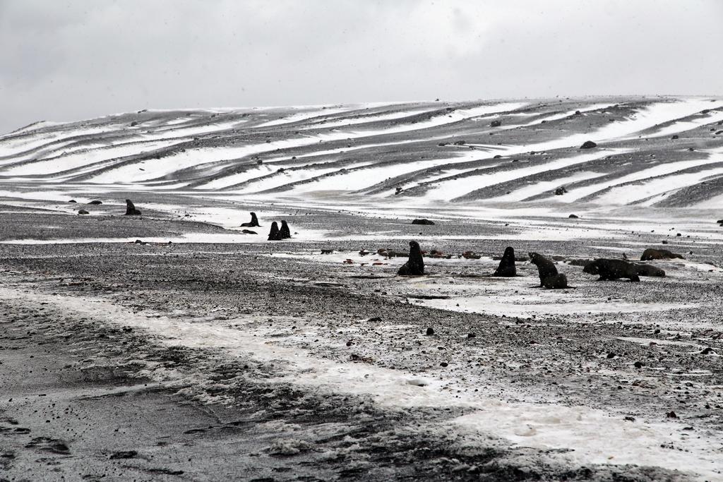 Ile de la Déception, Shetland