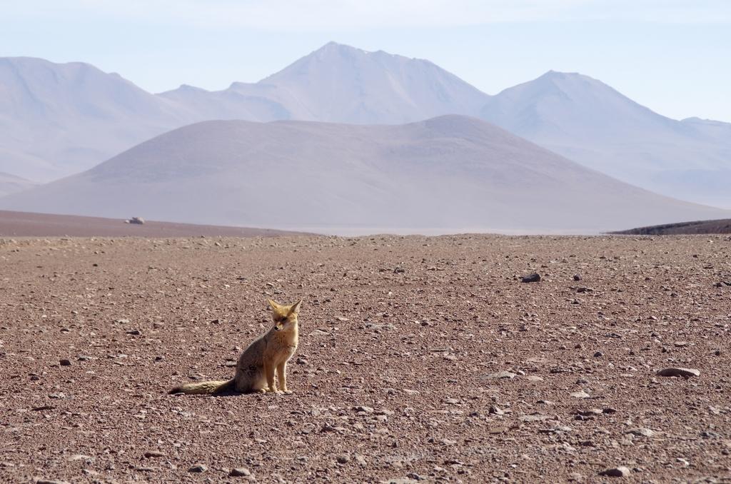 Desert d'Atacama - Bolivie