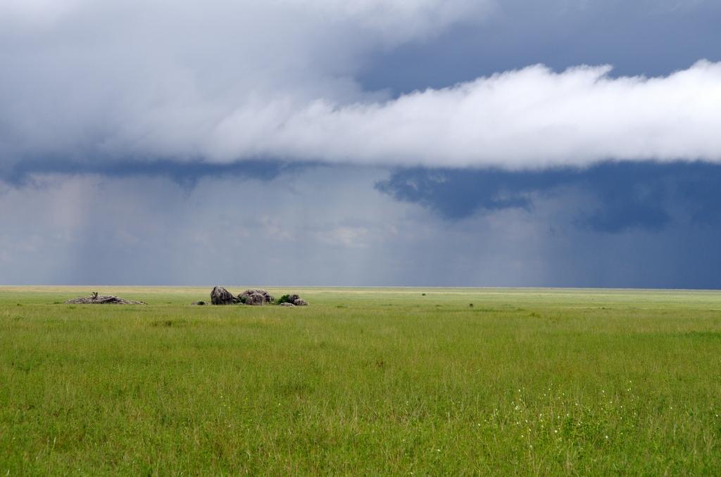 Peu avant les premières pluies annonçant la mousson - Serengeti