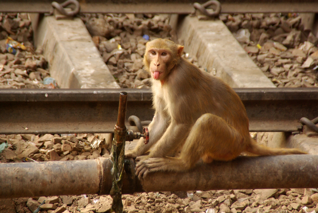 Le message est clair - Agra