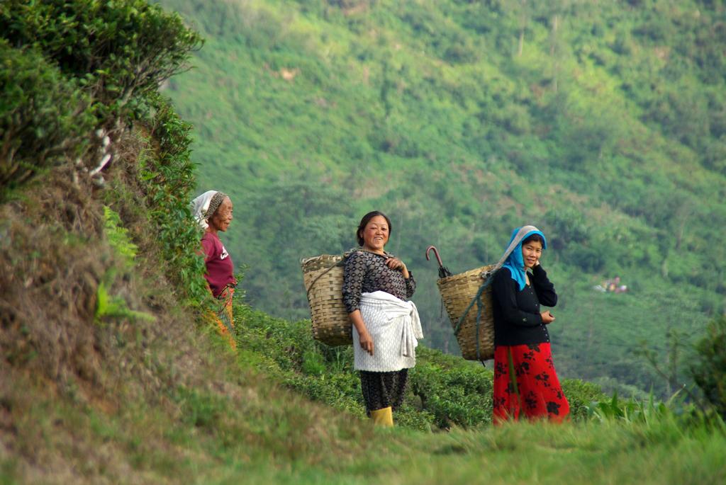3 générations de ceuilleuses de thé - Darjeeling