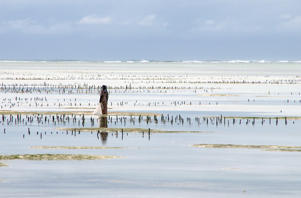 Des couleurs dignes de Monet, Bwejuu - Zanzibar
