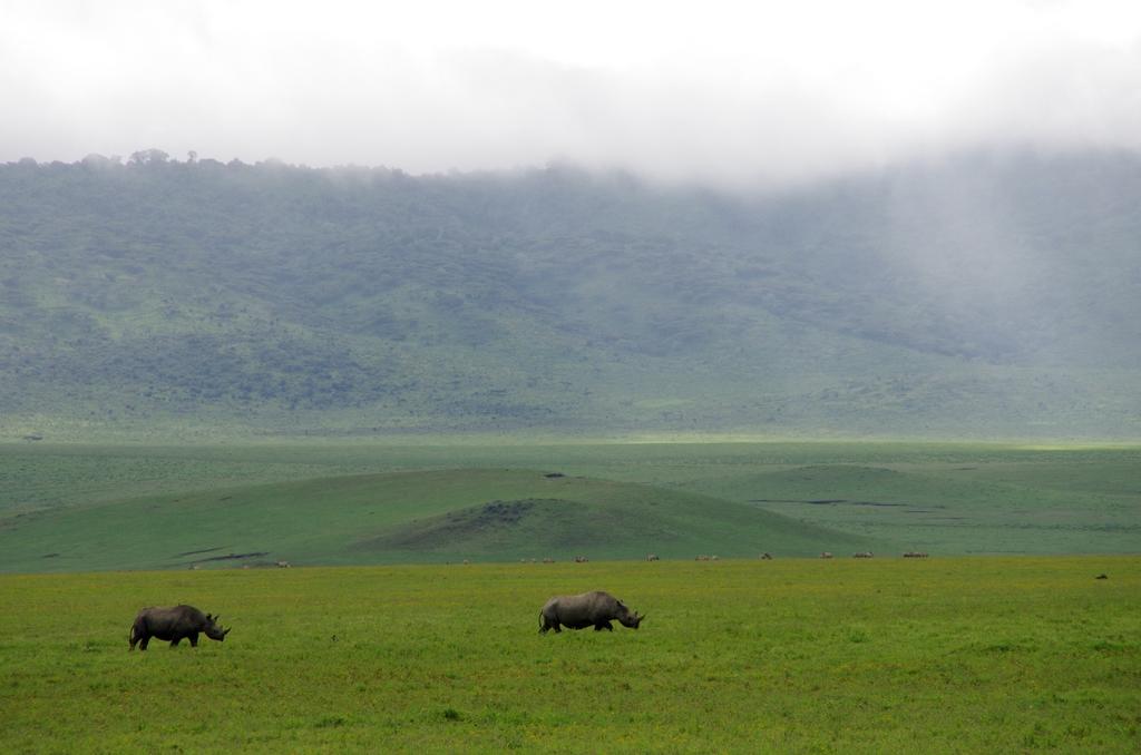 Rhinocéros noirs