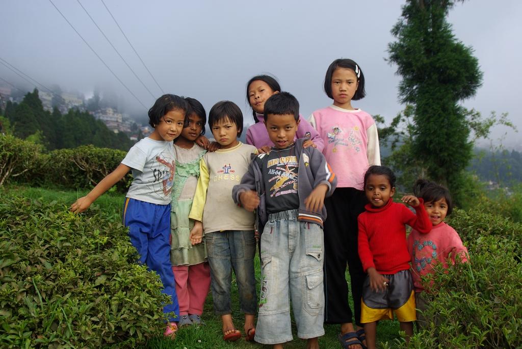 Enfants des plantations, Darjeeling - Inde