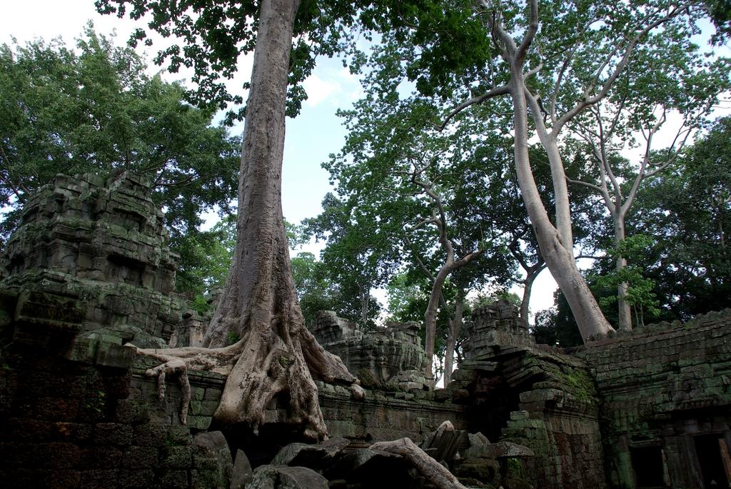 Tha Prohm - Angkor Thom, Cambodge
