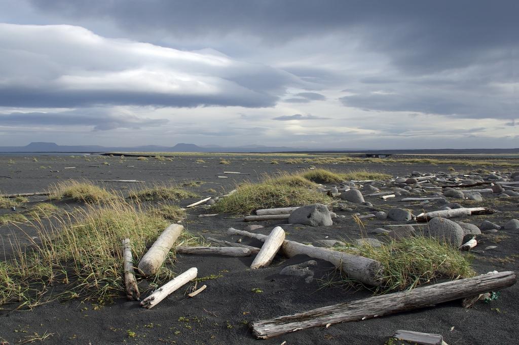 Bois flotté sur un plage de l'Arctique - Islande