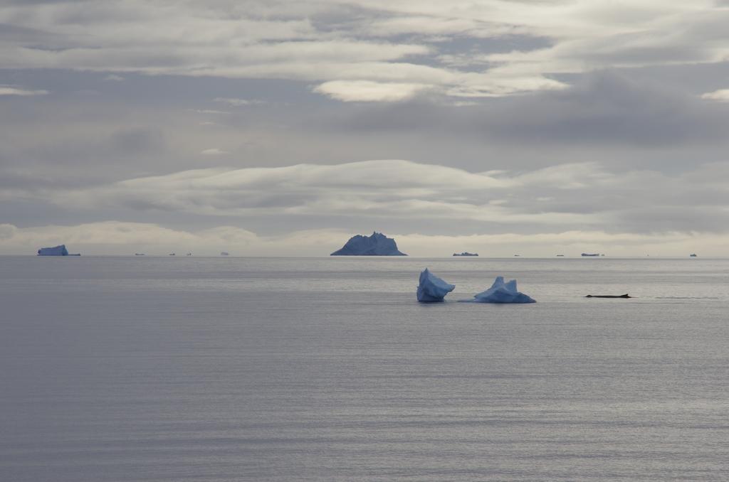Mer calme - Antarctique