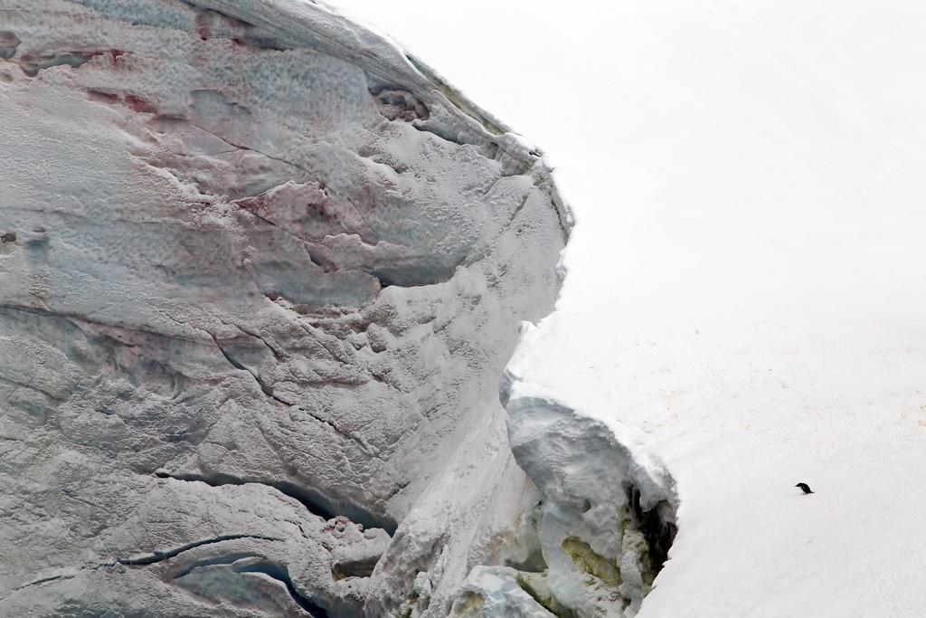 Surtout ne pas être trop curieux, sous peine de chuter - Antarctique