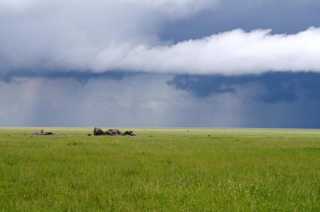 La savane paraît calme. Aucune trace d'animaux. Pourtant, quelques instants après cette prise de vue, un lion sortira fièrement des herbes hautes - Tanzanie