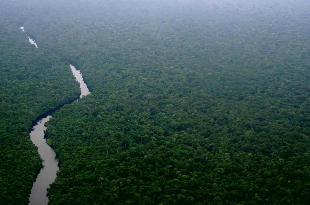 La forêt équatoriale s'étend à perte de vue, telle une mer verte - Gabon