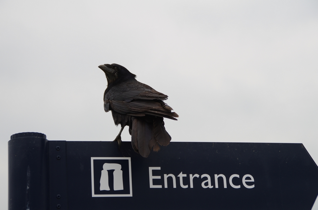 Entrée de Stonehenge. Les corbeaux y sont rois - Angleterre