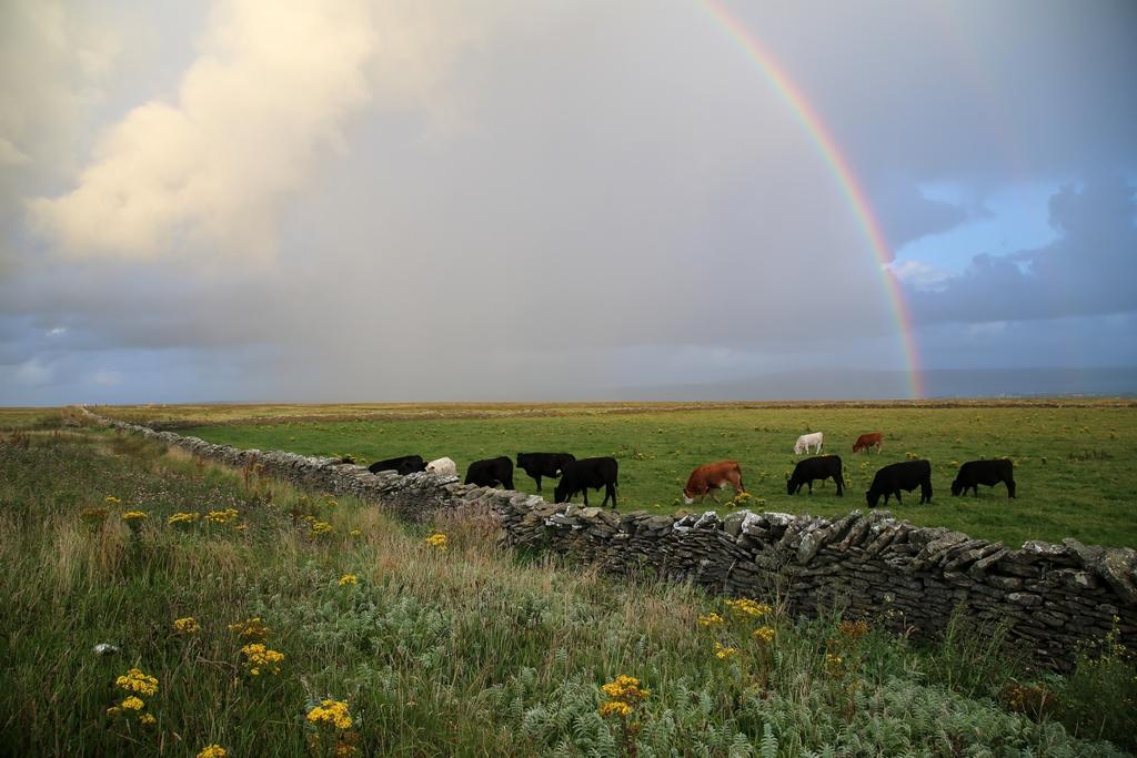 Que vienne la pluie - Irlande