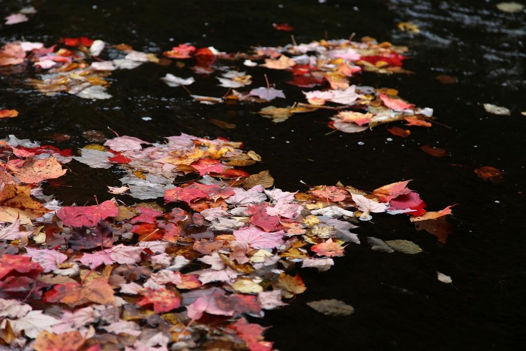 Couleurs d'automne, Parc de la Mauricie - Québec