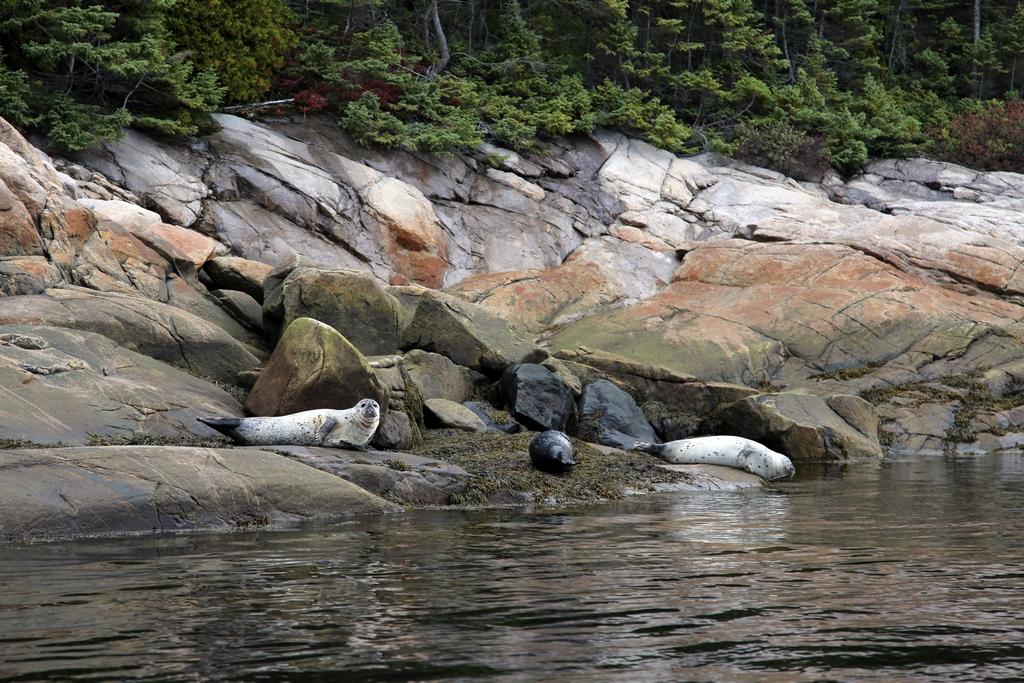 Rive de la rivière Saguenay - Québec