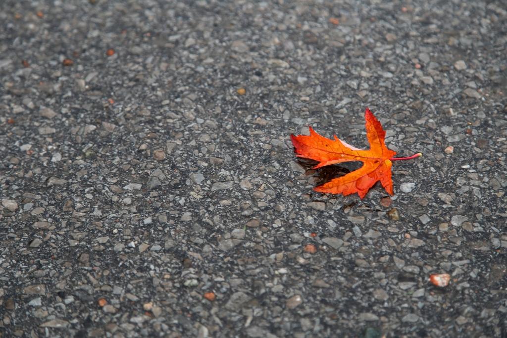 Couleurs d'automne - Québec