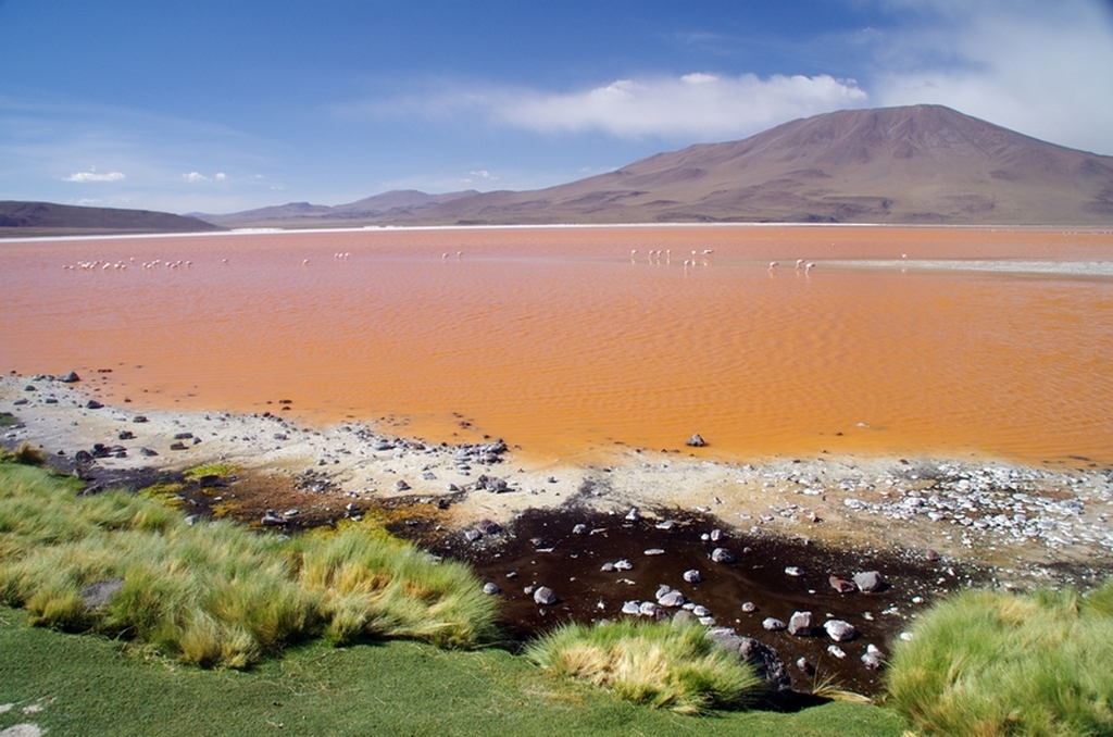 Lac rose - Bolivie