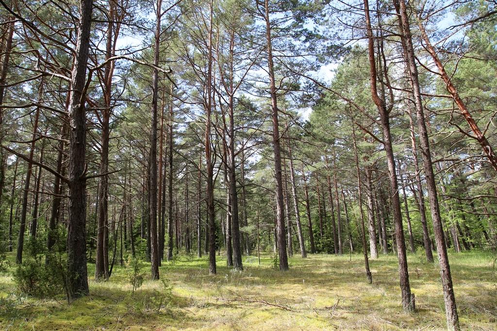 L'endroit parait calme mais ce n'est pas le cas, les taons sont légion - Estonie